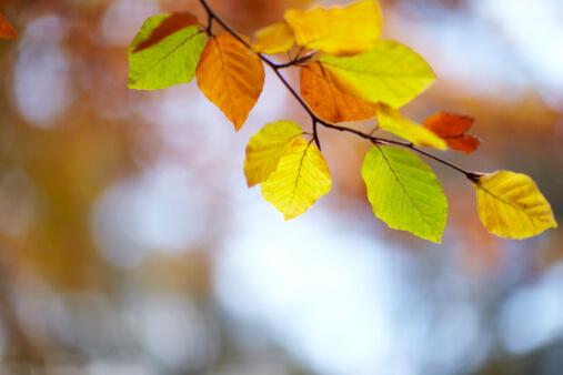 Beköszöntött az ősz és vele együtt valami más is. Elkezdődött az év utolsó üzleti negyedéve… Neked vajon milyen lesz?